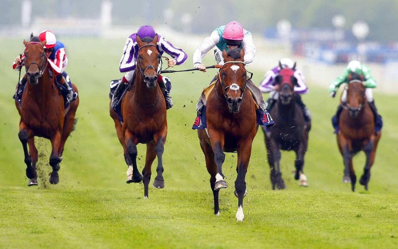 Horse betting terms mlg dundee united v st johnstone betting tips